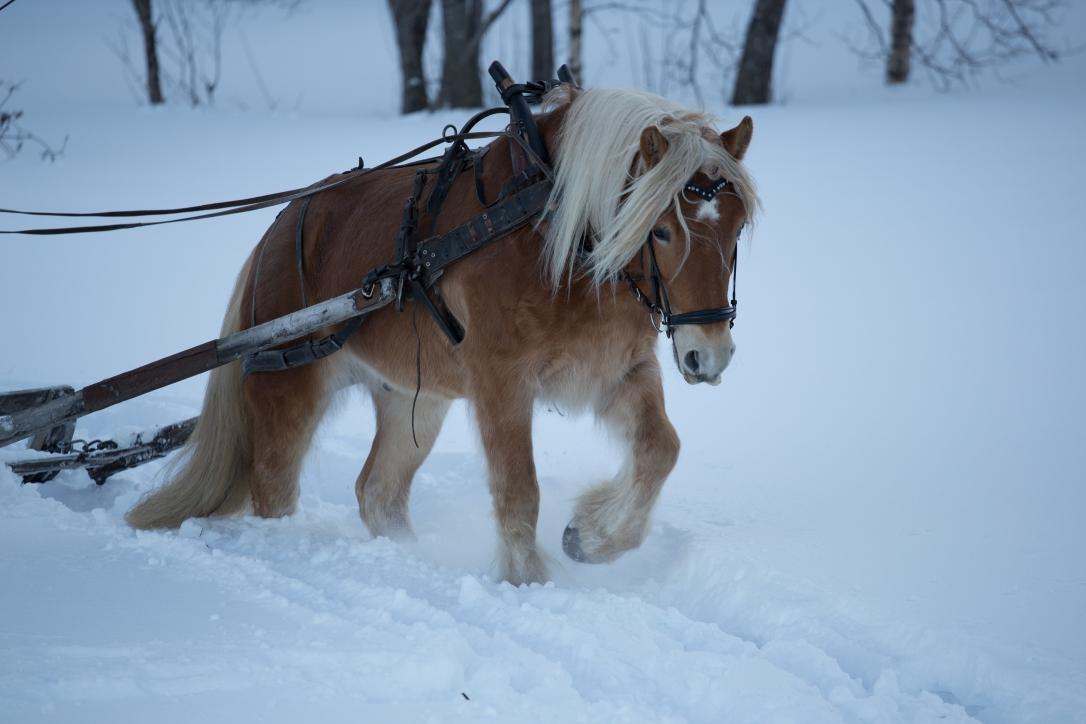 Reisaskeid vinter 2019. Foto Jonas René Johansen